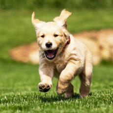 dog trainer website